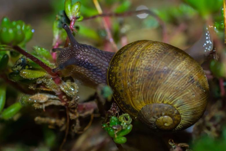 picture gastropod invertebrate detail nature slug