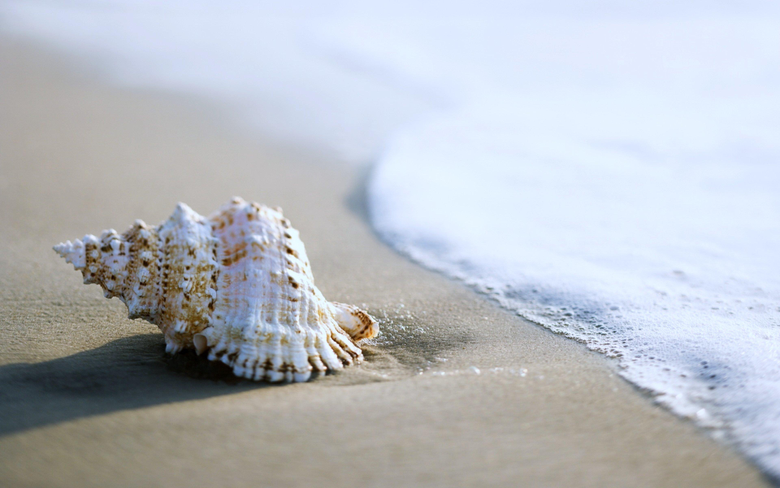 sea Beaches Sand Summer Nature Earth Shell Coquille