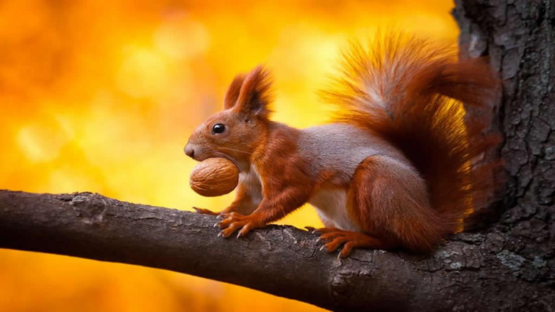 Memes For Funny Squirrel Wallpapers