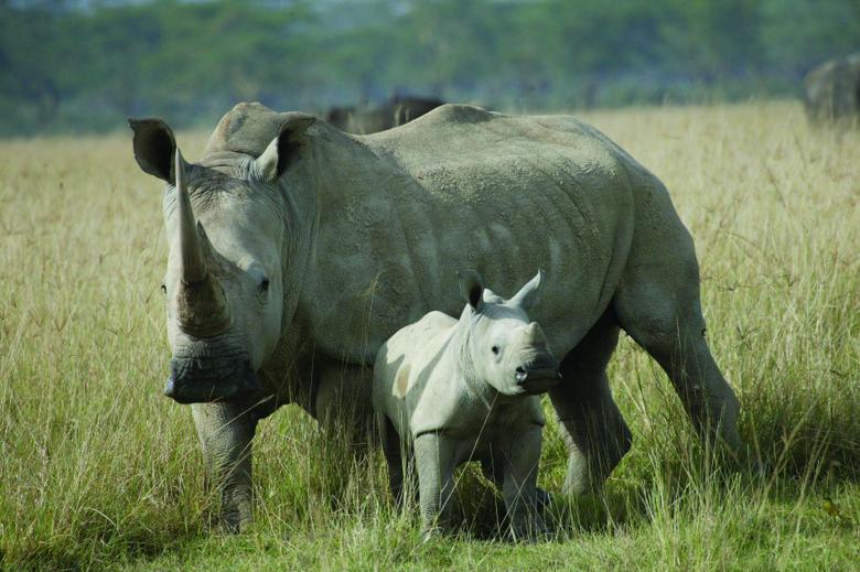 Rhino wallpapers Comics HQ Rhino pictures