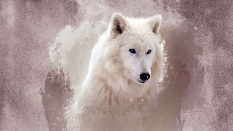 The Wolf Wallpapers