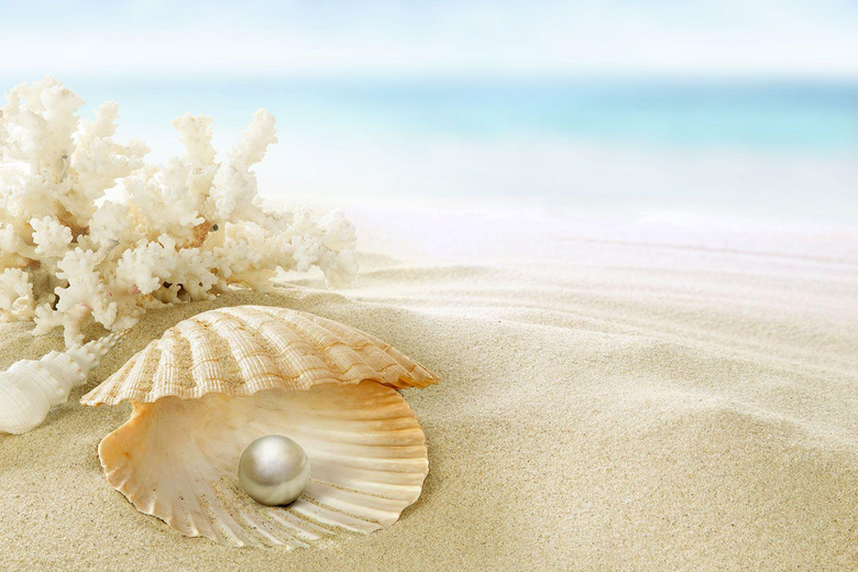 Order Oyster Pearl Wallpapers to create fantastic wall decor