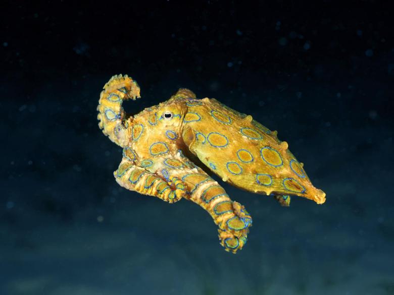 Sexy Wallpaper Octopus Wallpapers