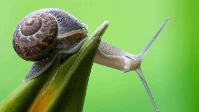 nature curious snails 1920x1080 wallpapers High Quality Wallpapers