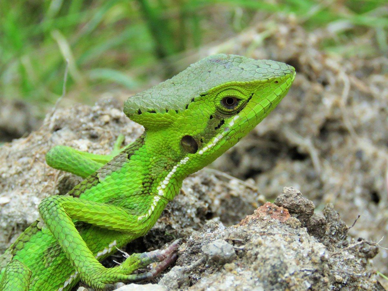 Reptile World Facts on Twitter