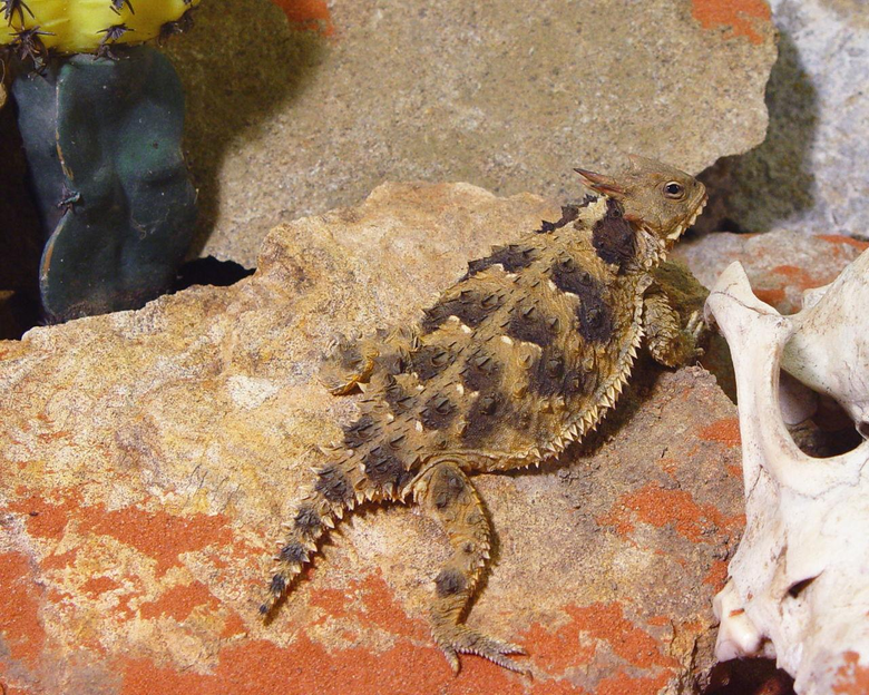 A List of Different Types of Lizards With Facts and Pictures