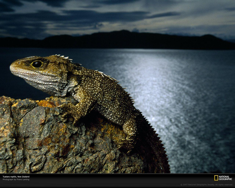 Animal Beauty on Tuatara
