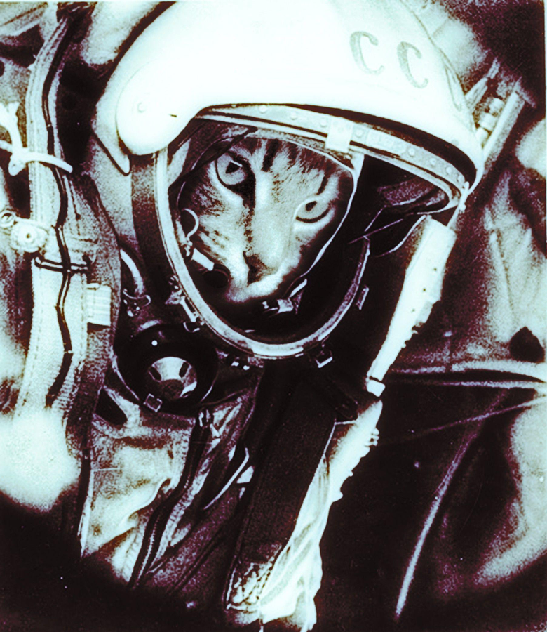 outer space cats humor astronauts USSR Yuri Gagarin