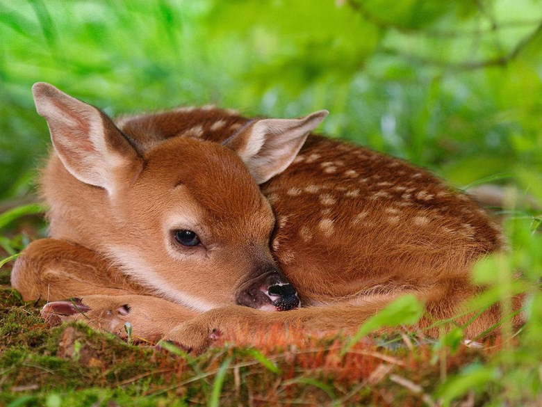 Where Is Wallpaper bambi wallpapers
