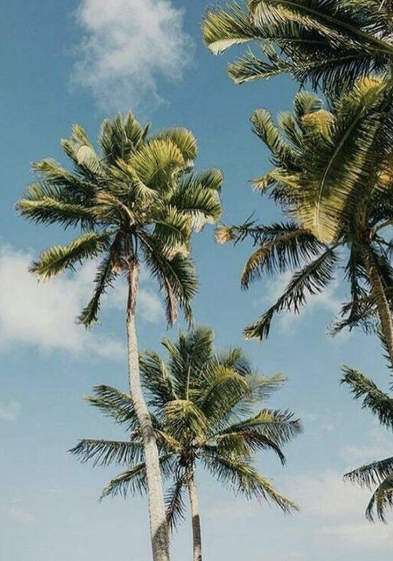 Tropical Aesthetic Wallpapers posted by Ethan Walker