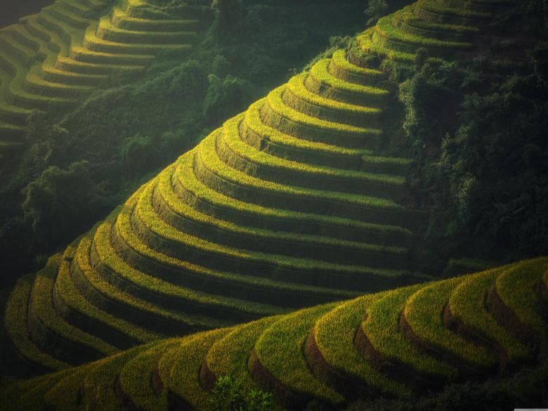 Beautiful Rice Terraces Landscape 4K HD Desktop Wallpapers for 4K