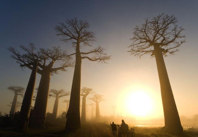Bumper Sticker Guru on Madagascar