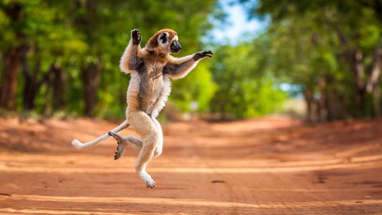 Madagascar Safaris