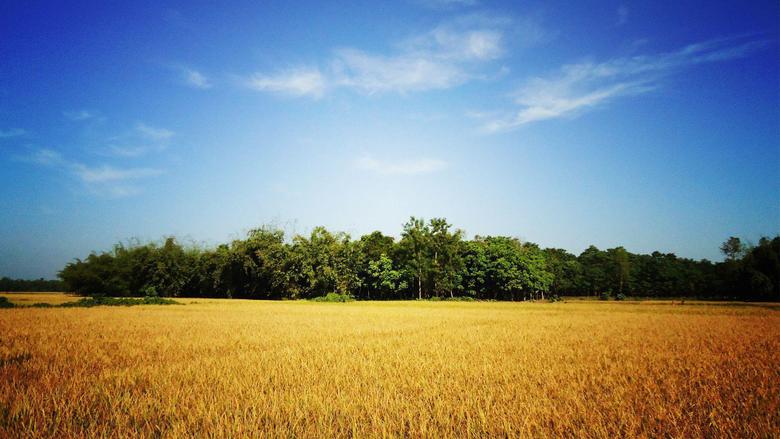 Village of Bangladesh