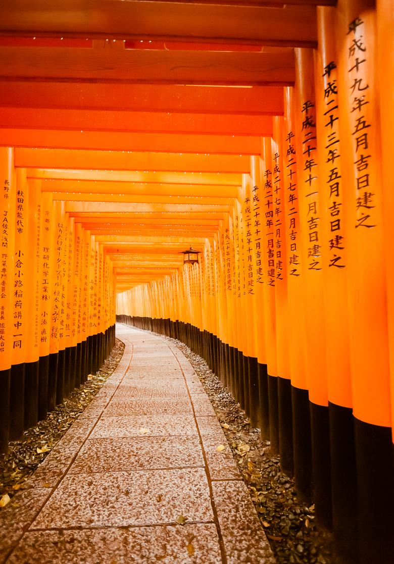 Torii Gates in the Rain at Fushimi Inari