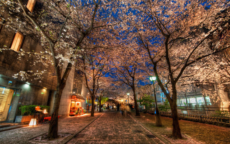 A Silent Evening in Kyoto Under the Cherry Blossoms widescreen
