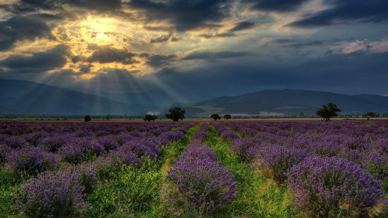 nature Landscape Hill Bulgaria Field Lavender Flowers Trees