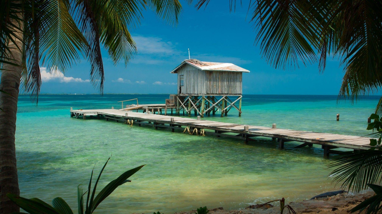 nature Landscape Beach Tropical Sea Palm Trees Dock Wooden
