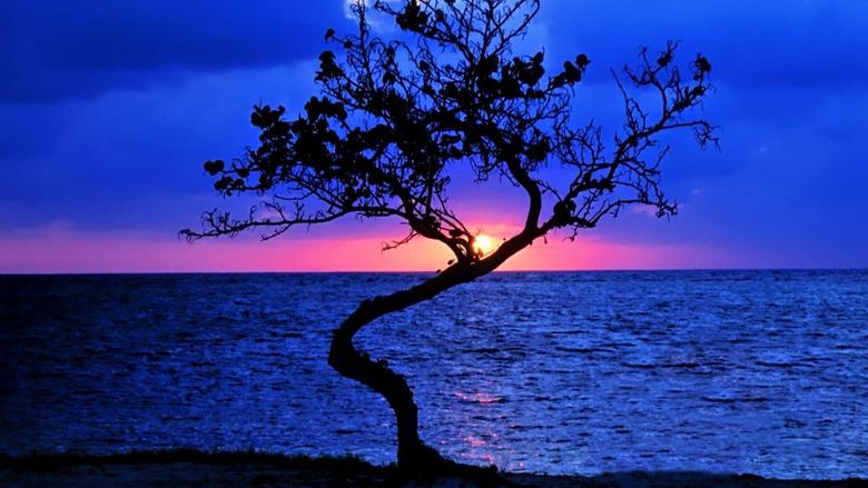 Sunsets Wonderful Sunset Lonely Tree Beautiful Belize Horizon