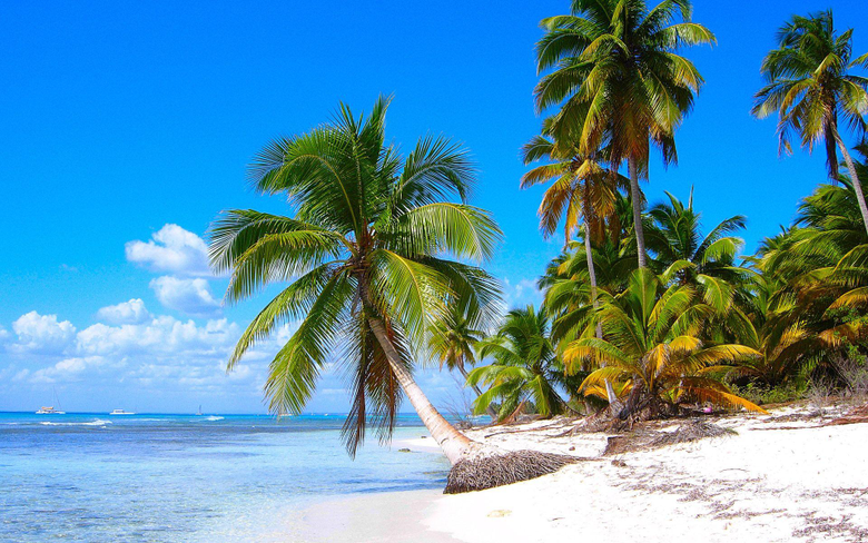 Saona Island Beach Near La Altagracia Province Dominican