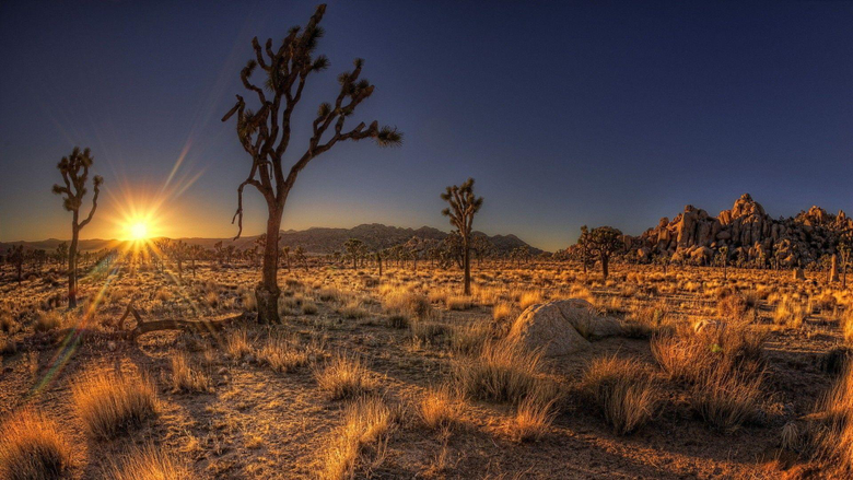 Desert Shadows Fantastic Desrt Sunrise Cactus Nevada Wallpapers