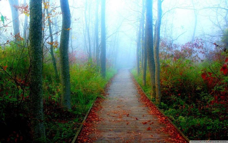 A Fall Adventure In The Wisconsin Woods HD desktop wallpapers