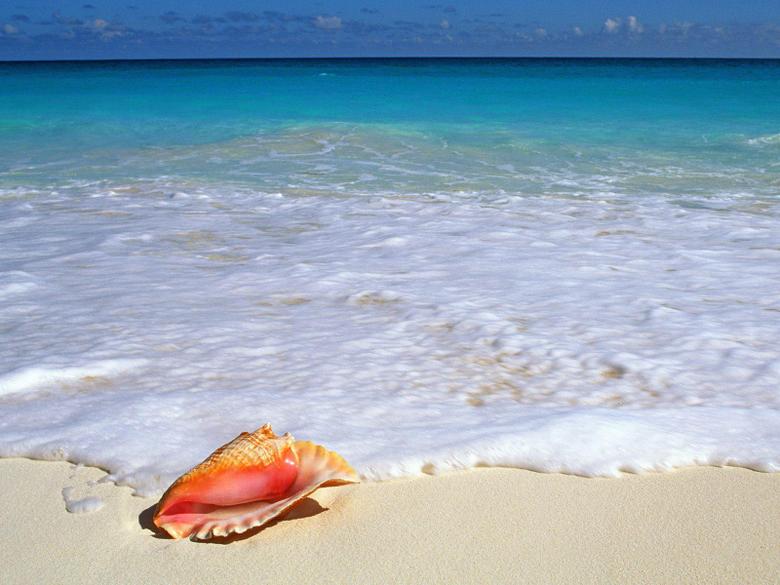 Beachside Treasure Yucatan Peninsula Mexico