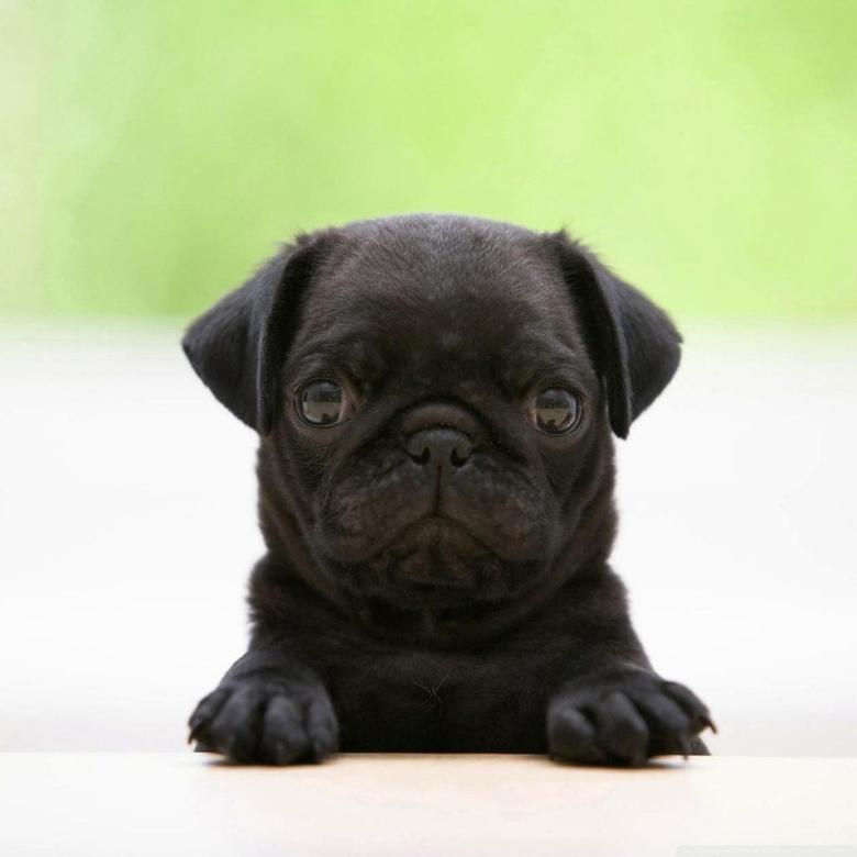 Cute Puppy Wallpapers Black Dog teahub io