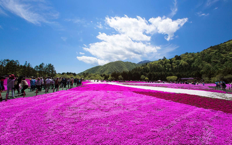 This Japanese Flower Festival Almost Doesn t Look Real