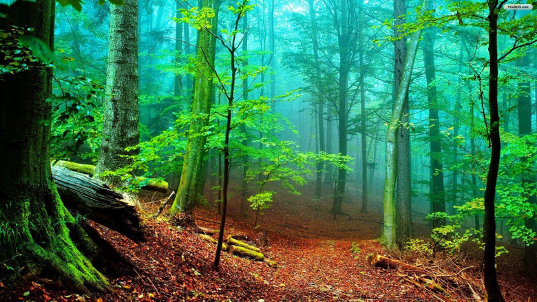 PARMIONOVA International Day of Forests 2015 21 March