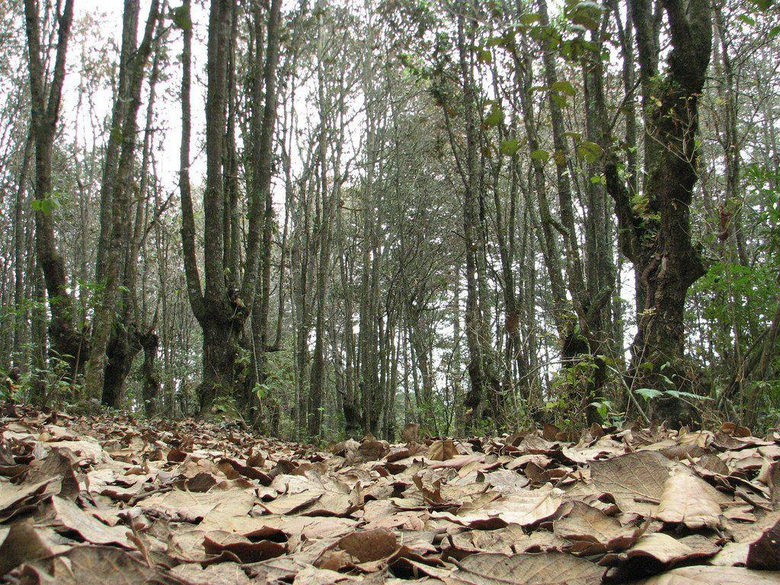 International Day of Forests Planeta