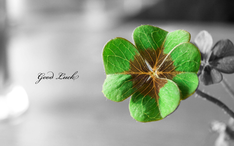 St Patricks Day Wallpapers