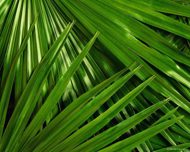 Palm Sunday Wallpapers 800x600
