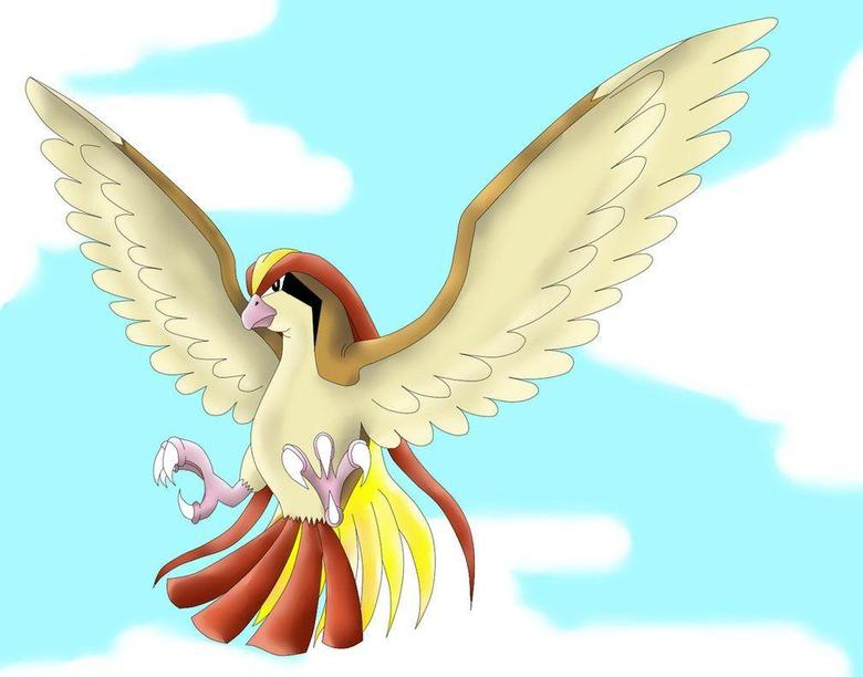 Pidgeot preparing to attack by phoenixn91