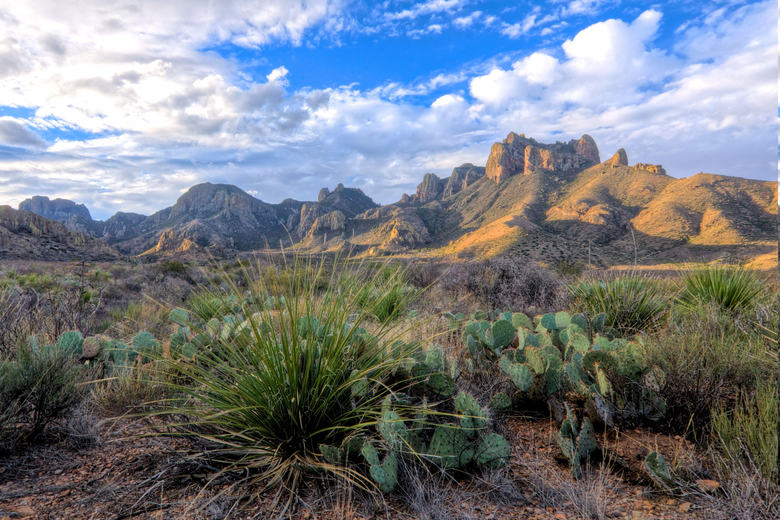 desert Cactus Landscape Shrubs Clouds Mountain Texas