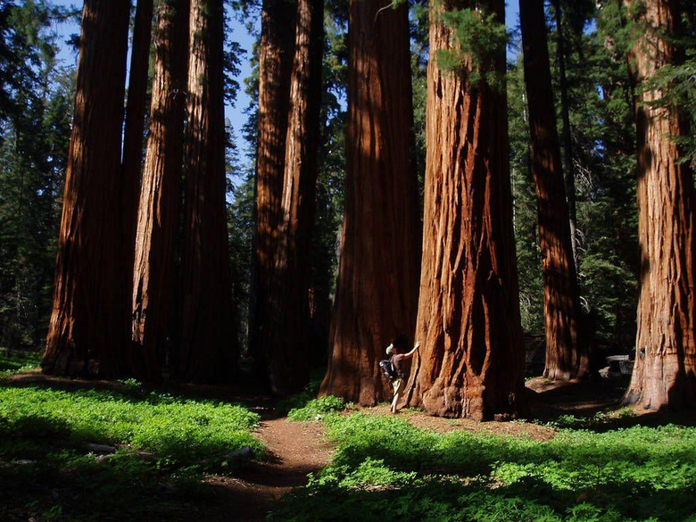 New Grant Grove Restaurant Opens in Kings Canyon National Park