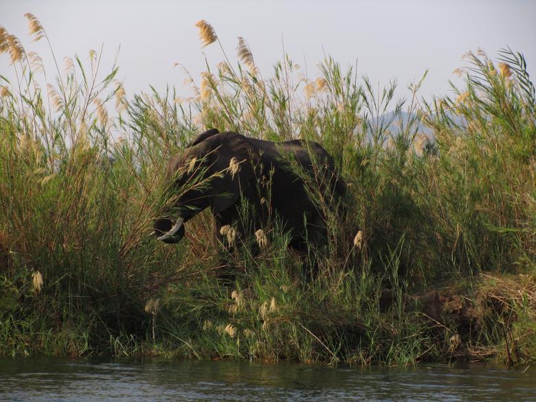 Zambia Lower Zambezi National Park
