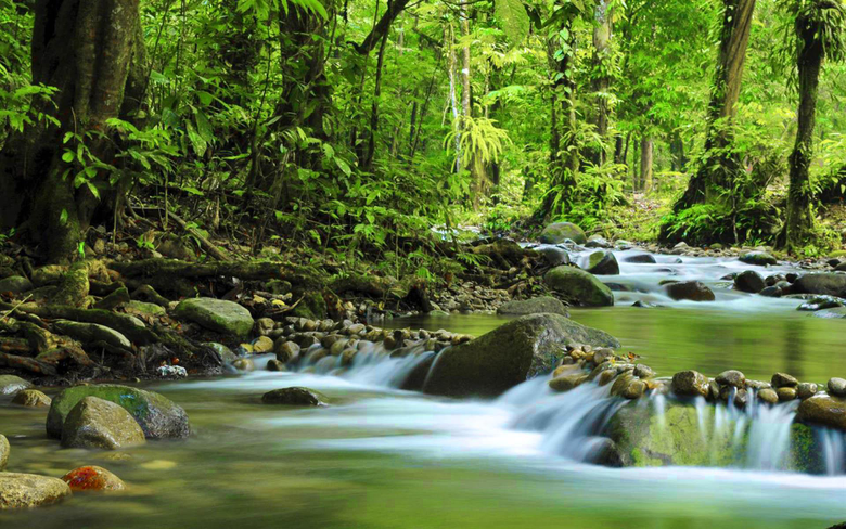 Mountain Small River Green Forest Dense Rock Stones Muir Woods