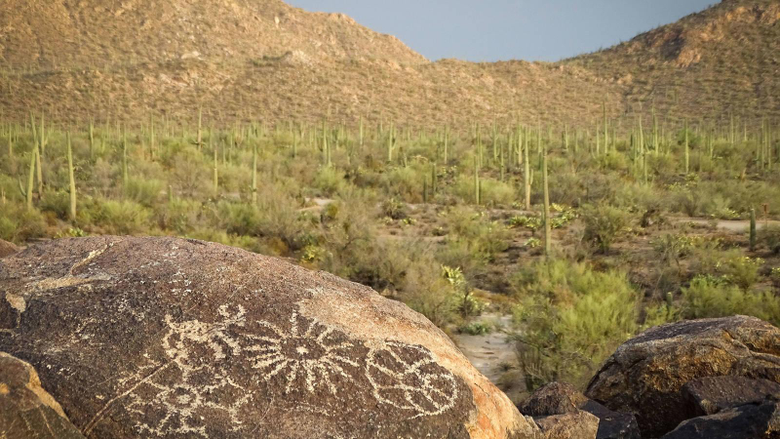 What Happens When the Saguaros Disappear National Parks