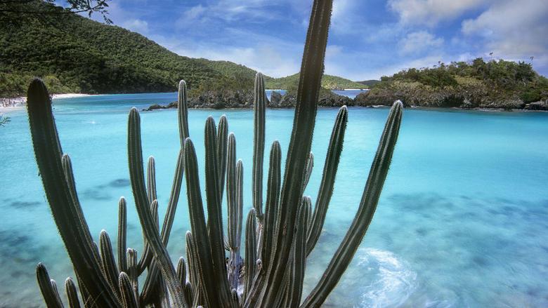 Cactus Trunk Bay Virgin Islands National Park Virgin Isla Full