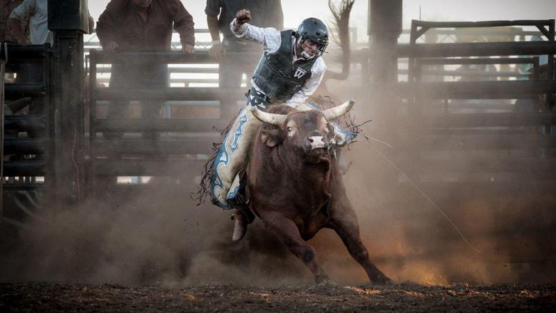 BULL RIDING bullrider cowboy western cow extreme bull rodeo