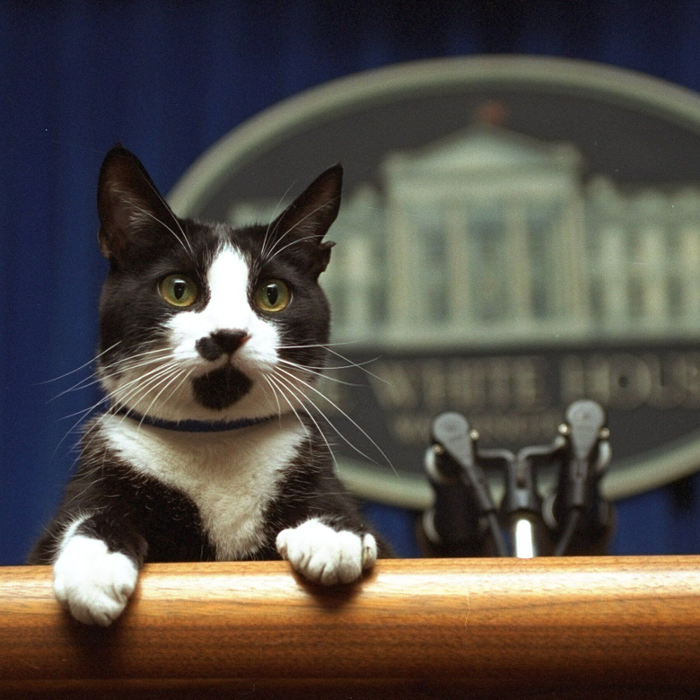 Meow Biden