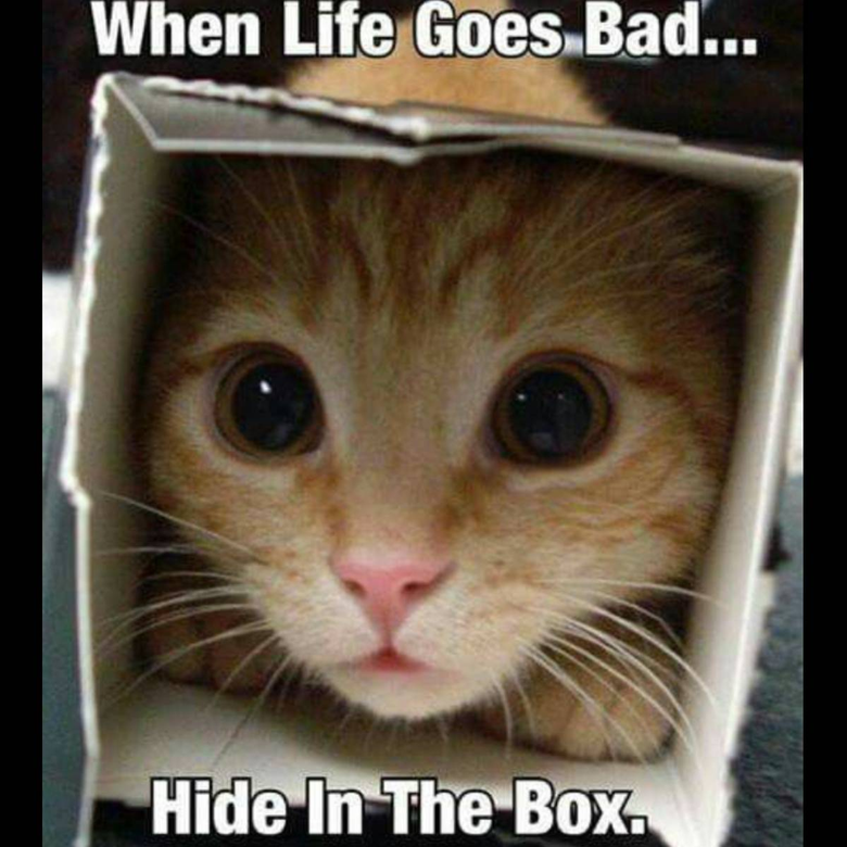 Hide In Teh Box