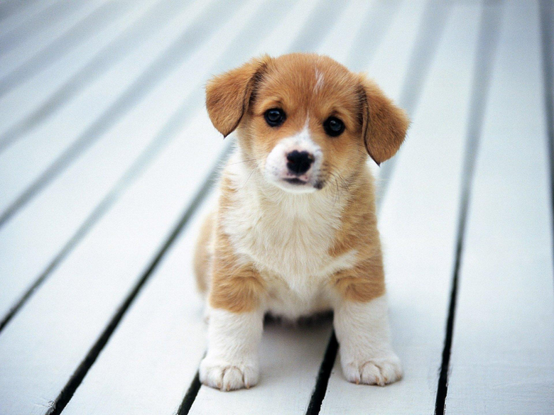Dog HD Wallpapers