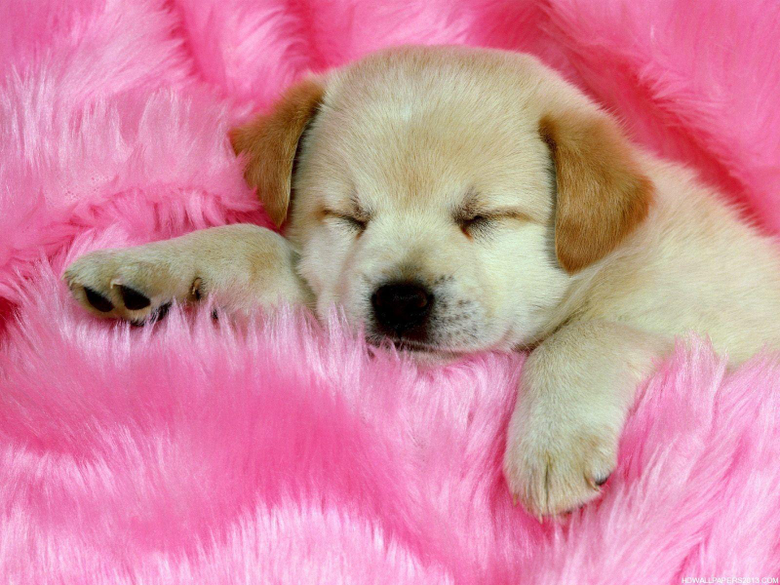 cute dogs wallpapers 14470