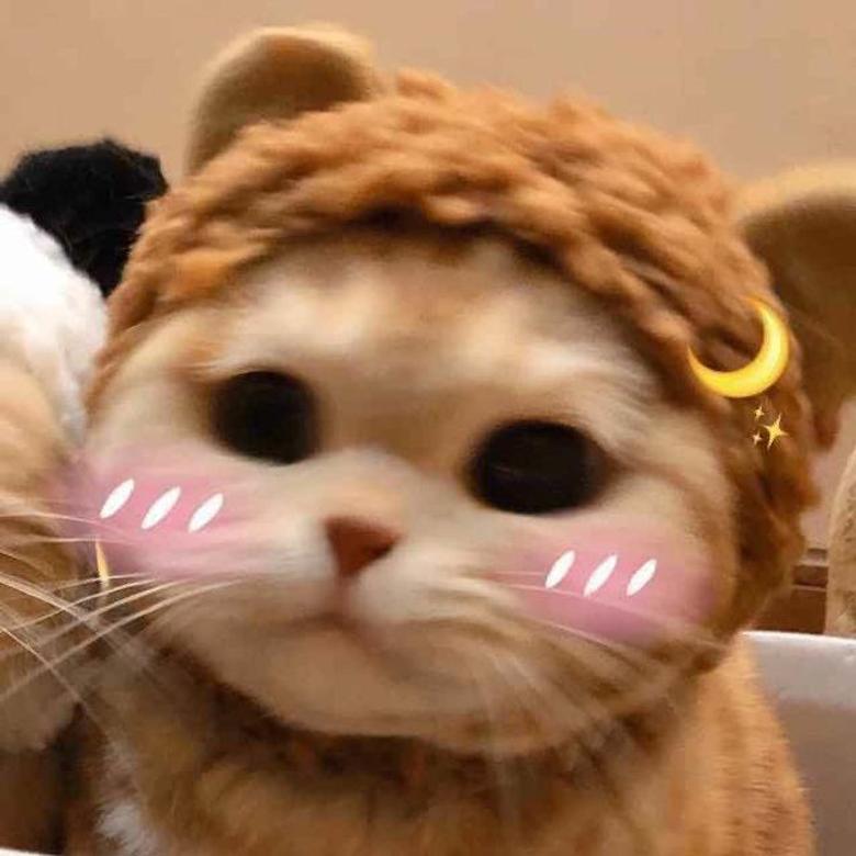 Aesthetic Cat