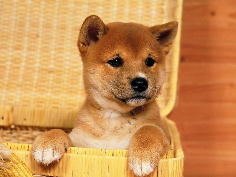 Lolas Puppy