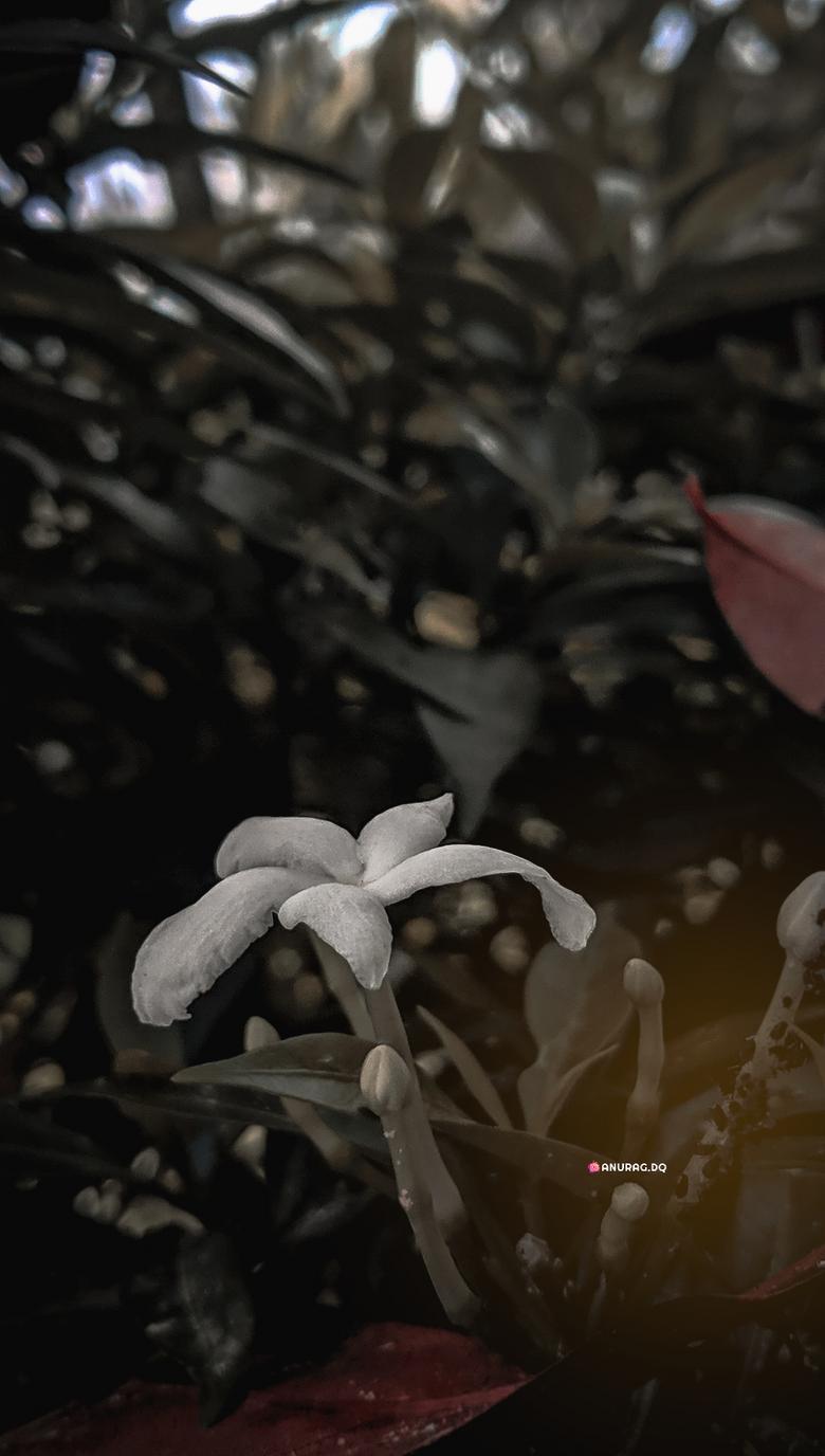 Flower HD 1020p Wallpaper Image