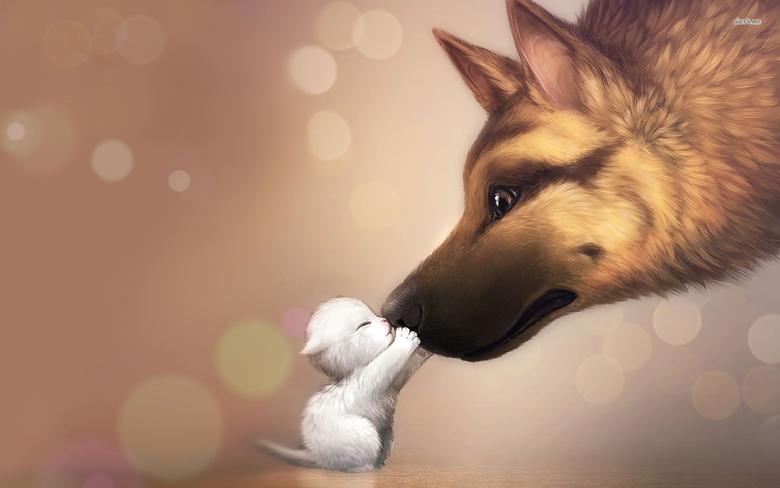 German shepherd and a cute kitten wallpapers