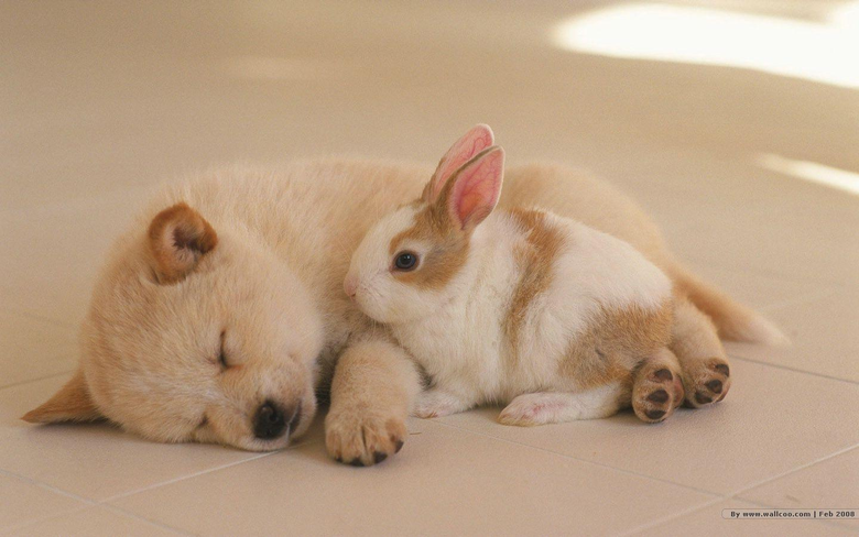 1440 900 Lovely Puppy wallpapers Lovely Puppies Photos 1440x900